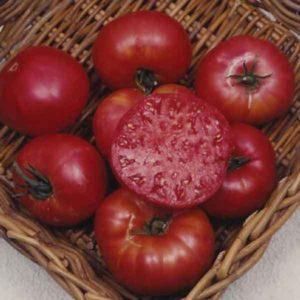 Tomato Beefsteak Mortgage Lifter Organic