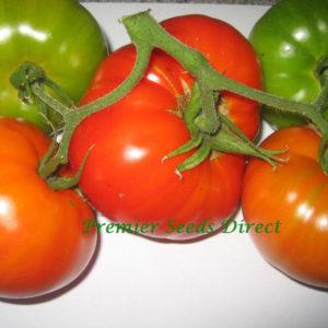 Tomato Brandywine Red Organic