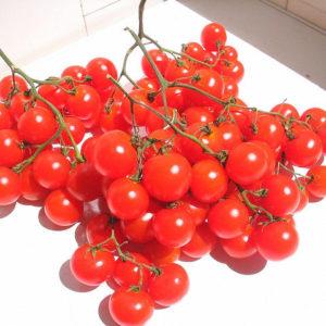 Tomato Riesentraube Cherry Organic