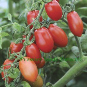 Tomato Cherry Floridity F1