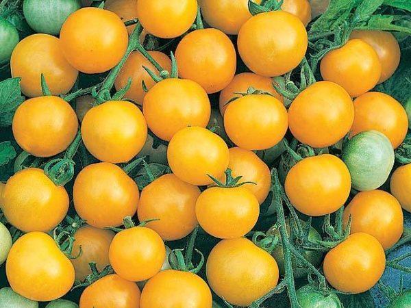 Tomato Cherry Honeybee F1