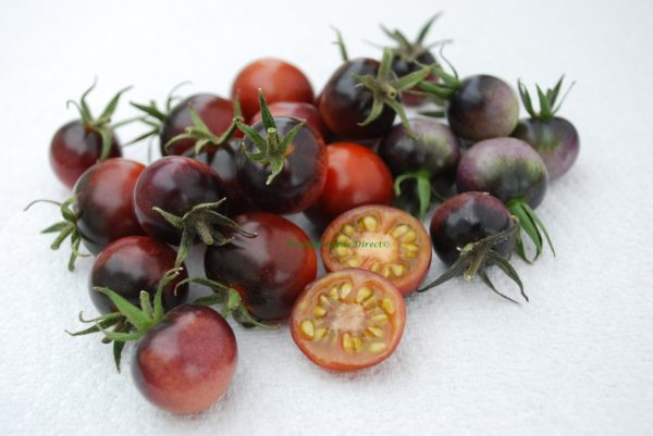 Tomato Cherry Indigo Blue Berries