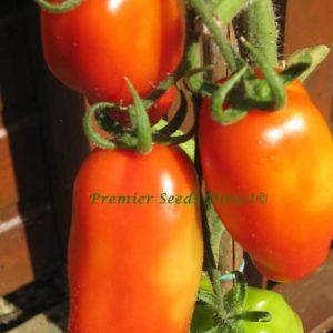 Tomato Roma Vf