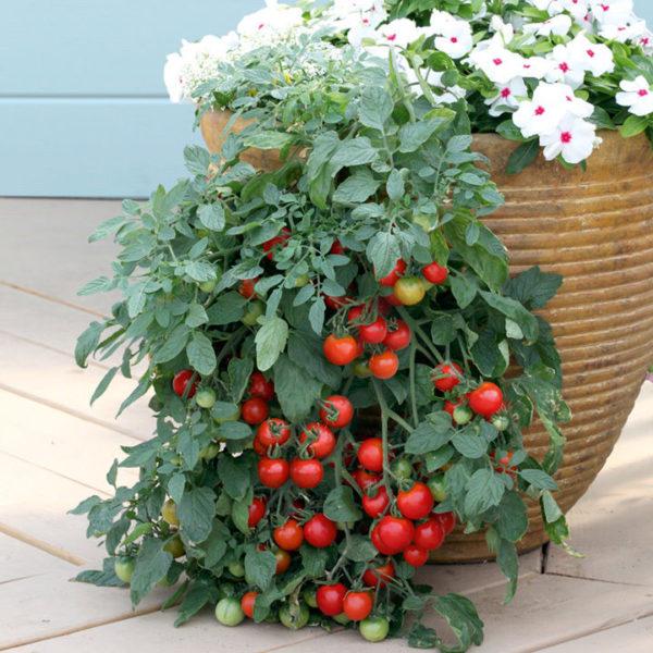 Tomato Tumbler