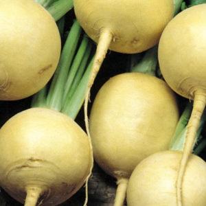 Turnip Golden Globe Organic