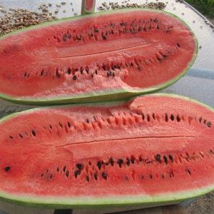 Water Melon Charlston Gray