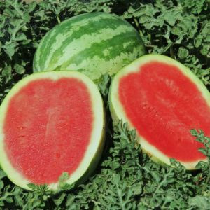 Water Melon Crimson Sweet