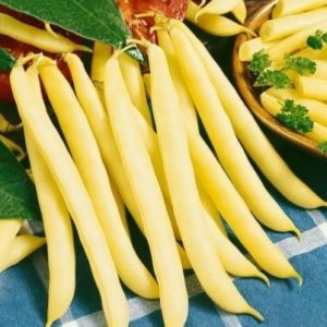 Dwarf Yellow French Bean Bergold