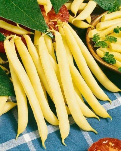 Dwarf Yellow French Bean Bergold