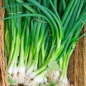 Onion Eiffel organic