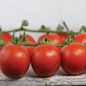 TOMATO – CHADWICK CHERRY ORGANIC new