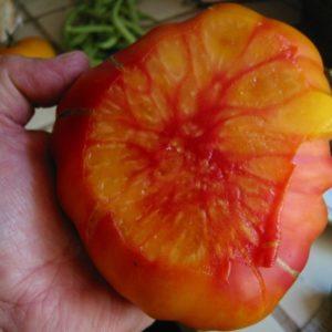 TOMATO – OLD GERMAN organic new