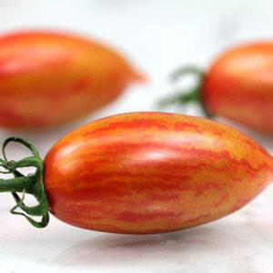 Tomato Cherry Artisan Pink Tiger new