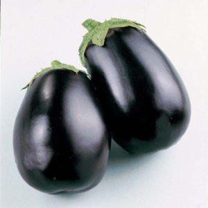 Aubergine Black Beauty Organic new