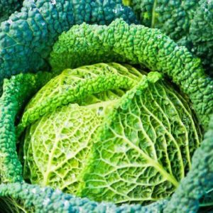 Cabbage Savoy Winter King new