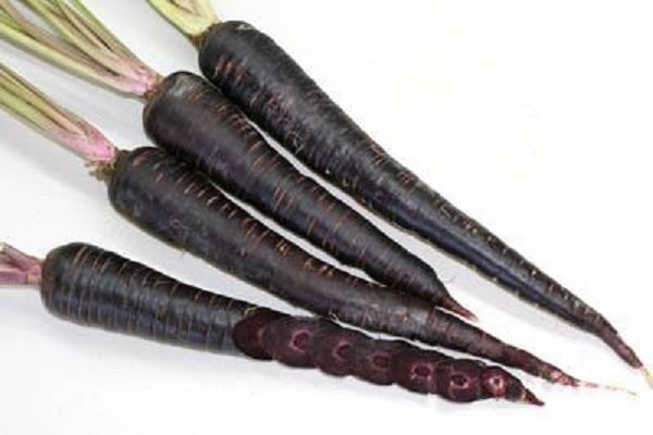 Carrot Deep Purple new