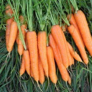 Carrot Flyaway F1 Organic new