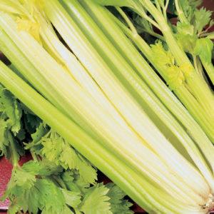 Celery Golden Self Blanching new
