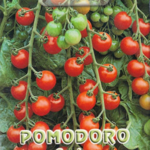 Pictorial Packet Cherry Tomato Cerise