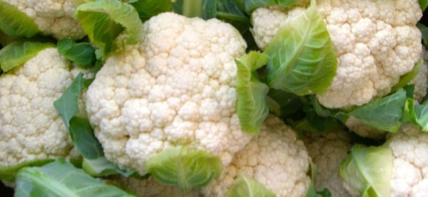 Cauliflower Snowcrown Organic
