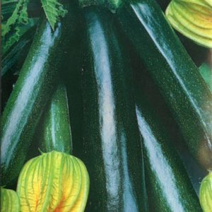 Courgette Black Beauty Organic