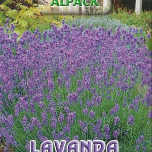 Pictorial Packet Lavender