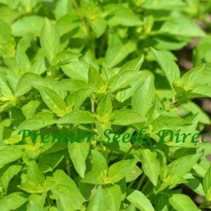 Herb Basil Lemon Organic