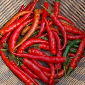 Hot Chilli Pepper Ring of Fire Organic