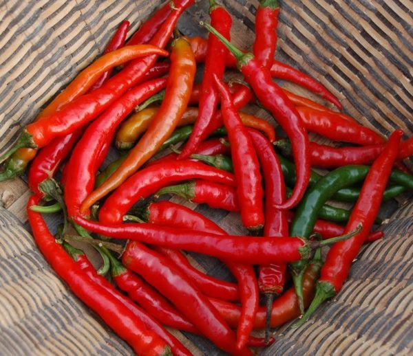 Hot Chilli Pepper Ring of Fire Organic