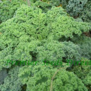 Kale Vates Blue Curled organic