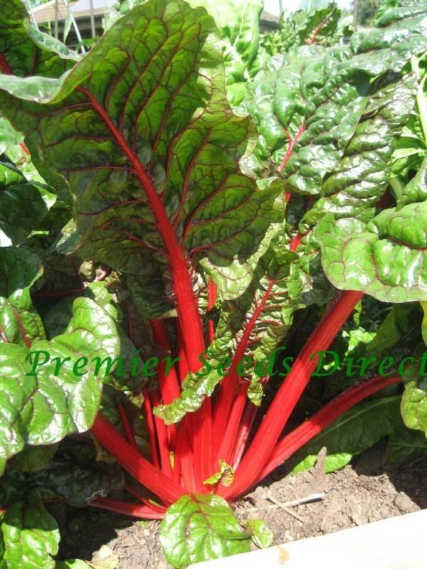 Swiss Chard Rhubarb Organic