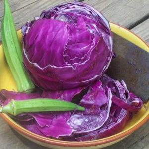 Cabbage Red Acre Organic