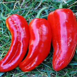 Sweet Pepper Marconi Red Organic