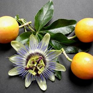 Passion Fruit Edible New