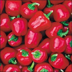 SWEET PEPPER - MINI BELL RED organic