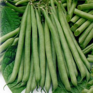 DWARF FRENCH BEAN - SLENDERETTE - 140 SEEDS (ORGANIC)