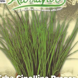 Herb Chives Pictorial Packet