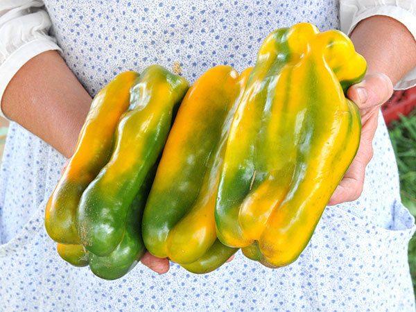 Sweet Pepper Yellow Monster