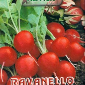 Italian Radish Saxa 2