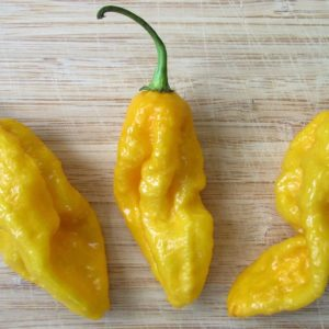 Hot Chili Pepper Devil's Tongue Yellow