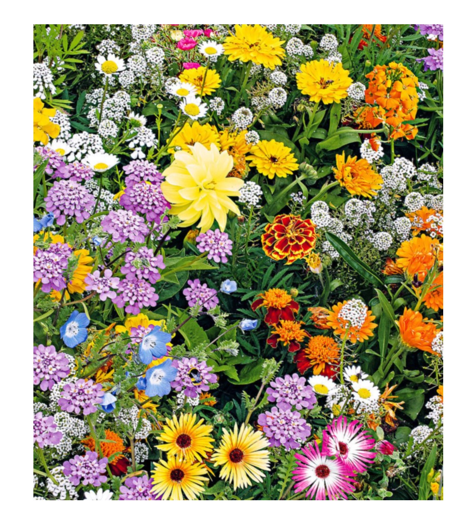 Flower Butterfly & Bee Mix - Premier Seeds Direct