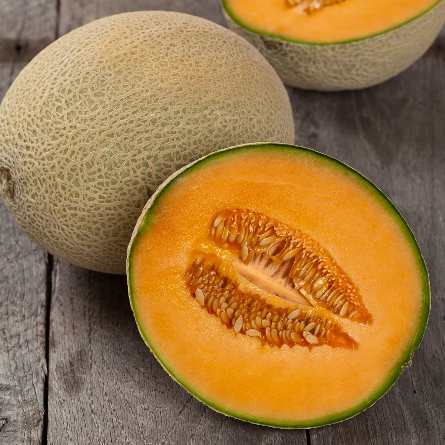 melon cantaloupe hales best jumbo melon premier seeds direct ltd