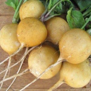 VEGETABLE RADISH ZLATA YELLOW