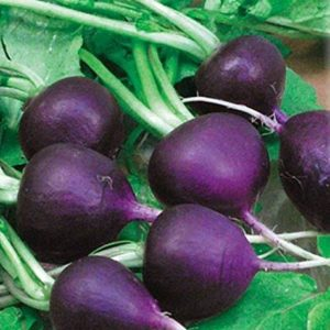 VEGETABLE RADISH MALAGA PURPLE