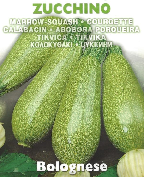 ' COURGETTE - BOLOGNESE - 5.0 GRAM - APPROX 38 SEEDS '