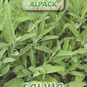 Pictorial Packet Italian Sage