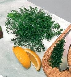 Herb Dill Bouquet Anethum Graveolens