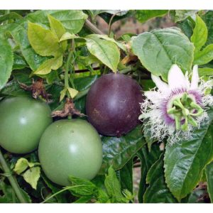 Flowers Passion Fruit Edible