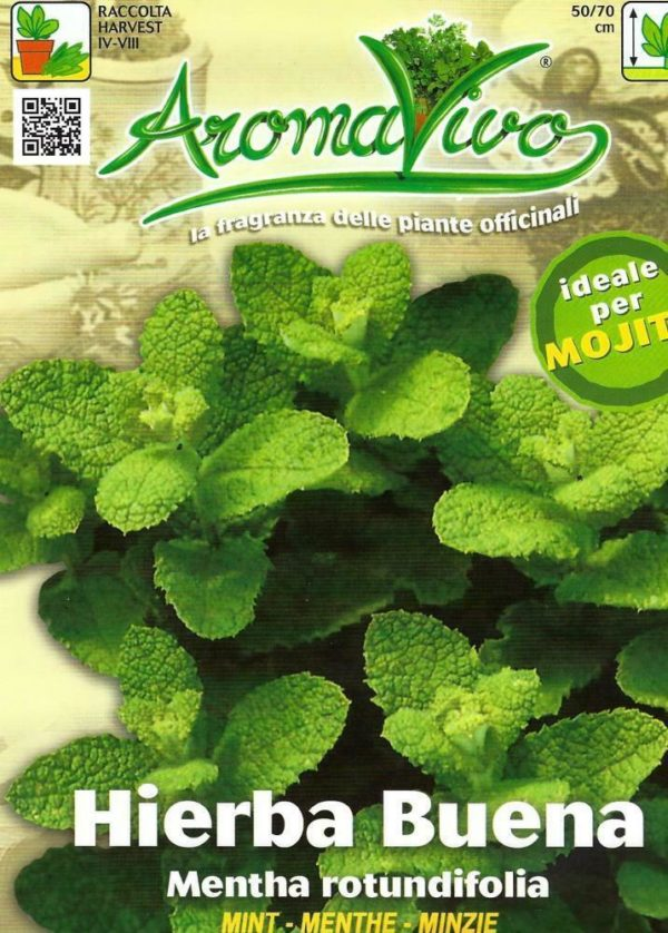MINT - ROUND LEAVED - 0.1 GRAM APPROX 1250 SEEDS - PICTORIAL PACKET