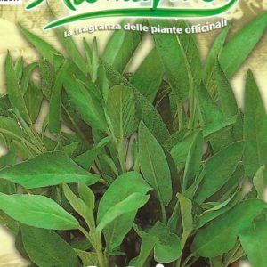 ITALIAN SAGE – PICTORIAL PACKET
